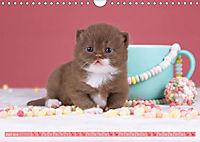 Katzenkinder - Britisch Kurzhaar (Wandkalender 2019 DIN A4 quer) - Produktdetailbild 6