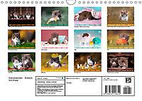 Katzenkinder - Britisch Kurzhaar (Wandkalender 2019 DIN A4 quer) - Produktdetailbild 13