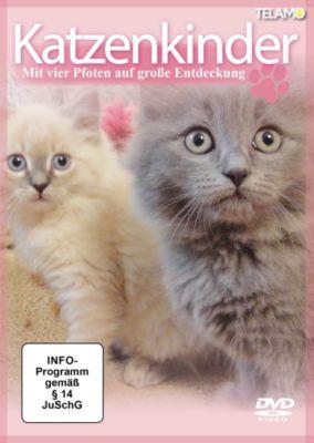 Katzenkinder - Mit vier Pfoten auf grosse Entdeckung