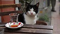 Kedi - Von Katzen und Menschen - Produktdetailbild 1