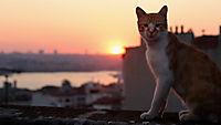 Kedi - Von Katzen und Menschen - Produktdetailbild 2