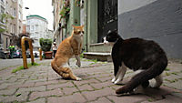 Kedi - Von Katzen und Menschen - Produktdetailbild 4