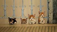 Kedi - Von Katzen und Menschen - Produktdetailbild 6