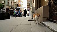 Kedi - Von Katzen und Menschen - Produktdetailbild 7