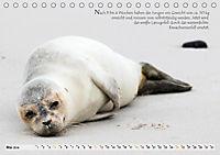 Kegelrobben auf der Insel Düne (Tischkalender 2019 DIN A5 quer) - Produktdetailbild 5