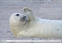Kegelrobben auf der Insel Düne (Tischkalender 2019 DIN A5 quer) - Produktdetailbild 1