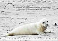 Kegelrobben auf der Insel Düne (Tischkalender 2019 DIN A5 quer) - Produktdetailbild 3