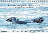 Kegelrobben auf der Insel Düne (Tischkalender 2019 DIN A5 quer) - Produktdetailbild 11