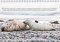 Kegelrobben auf der Insel Düne (Tischkalender 2019 DIN A5 quer) - Produktdetailbild 4