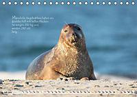 Kegelrobben auf der Insel Düne (Tischkalender 2019 DIN A5 quer) - Produktdetailbild 7