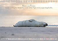 Kegelrobben auf der Insel Düne (Tischkalender 2019 DIN A5 quer) - Produktdetailbild 12