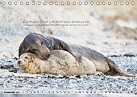 Kegelrobben auf der Insel Düne (Tischkalender 2019 DIN A5 quer) - Produktdetailbild 9