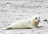 Kegelrobben auf der Insel Düne (Wandkalender 2019 DIN A2 quer) - Produktdetailbild 3