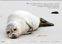 Kegelrobben auf der Insel Düne (Wandkalender 2019 DIN A2 quer) - Produktdetailbild 5