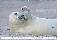 Kegelrobben auf der Insel Düne (Wandkalender 2019 DIN A2 quer) - Produktdetailbild 1