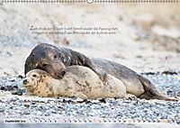 Kegelrobben auf der Insel Düne (Wandkalender 2019 DIN A2 quer) - Produktdetailbild 9