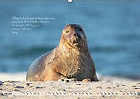 Kegelrobben auf der Insel Düne (Wandkalender 2019 DIN A2 quer) - Produktdetailbild 7