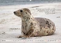 Kegelrobben auf der Insel Düne (Wandkalender 2019 DIN A2 quer) - Produktdetailbild 6