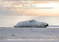 Kegelrobben auf der Insel Düne (Wandkalender 2019 DIN A2 quer) - Produktdetailbild 12