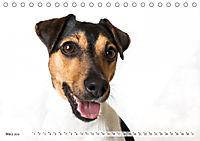 Kleine Hunde - Große Blicke (Tischkalender 2019 DIN A5 quer) - Produktdetailbild 3