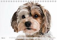 Kleine Hunde - Große Blicke (Tischkalender 2019 DIN A5 quer) - Produktdetailbild 5