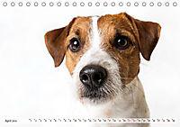 Kleine Hunde - Große Blicke (Tischkalender 2019 DIN A5 quer) - Produktdetailbild 4