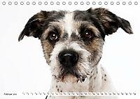 Kleine Hunde - Große Blicke (Tischkalender 2019 DIN A5 quer) - Produktdetailbild 2
