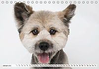 Kleine Hunde - Große Blicke (Tischkalender 2019 DIN A5 quer) - Produktdetailbild 1