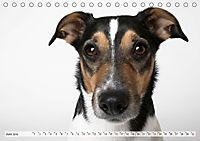 Kleine Hunde - Große Blicke (Tischkalender 2019 DIN A5 quer) - Produktdetailbild 6