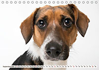 Kleine Hunde - Große Blicke (Tischkalender 2019 DIN A5 quer) - Produktdetailbild 9