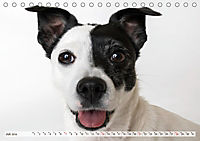 Kleine Hunde - Große Blicke (Tischkalender 2019 DIN A5 quer) - Produktdetailbild 7