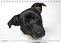Kleine Hunde - Große Blicke (Tischkalender 2019 DIN A5 quer) - Produktdetailbild 11