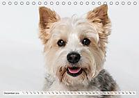 Kleine Hunde - Große Blicke (Tischkalender 2019 DIN A5 quer) - Produktdetailbild 12
