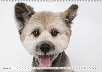 Kleine Hunde - Grosse Blicke (Wandkalender 2019 DIN A2 quer) - Produktdetailbild 1