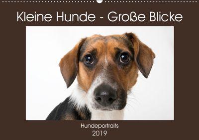 Kleine Hunde - Grosse Blicke (Wandkalender 2019 DIN A2 quer), Akrema-Photography