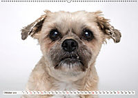 Kleine Hunde - Grosse Blicke (Wandkalender 2019 DIN A2 quer) - Produktdetailbild 10