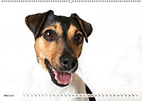 Kleine Hunde - Grosse Blicke (Wandkalender 2019 DIN A2 quer) - Produktdetailbild 3