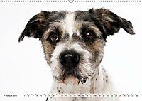 Kleine Hunde - Grosse Blicke (Wandkalender 2019 DIN A2 quer) - Produktdetailbild 2