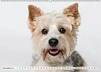 Kleine Hunde - Grosse Blicke (Wandkalender 2019 DIN A2 quer) - Produktdetailbild 12