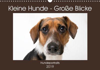 Kleine Hunde - Grosse Blicke (Wandkalender 2019 DIN A3 quer), Akrema-Photography