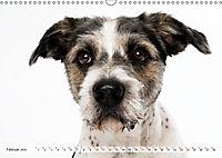 Kleine Hunde - Grosse Blicke (Wandkalender 2019 DIN A3 quer) - Produktdetailbild 2