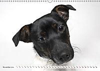 Kleine Hunde - Große Blicke (Wandkalender 2019 DIN A3 quer) - Produktdetailbild 11