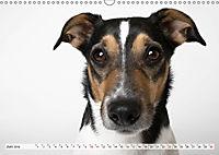 Kleine Hunde - Grosse Blicke (Wandkalender 2019 DIN A3 quer) - Produktdetailbild 6