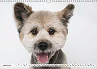 Kleine Hunde - Große Blicke (Wandkalender 2019 DIN A3 quer) - Produktdetailbild 1