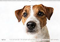 Kleine Hunde - Grosse Blicke (Wandkalender 2019 DIN A3 quer) - Produktdetailbild 4
