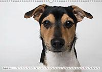 Kleine Hunde - Grosse Blicke (Wandkalender 2019 DIN A3 quer) - Produktdetailbild 8