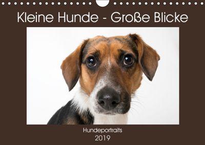 Kleine Hunde - Große Blicke (Wandkalender 2019 DIN A4 quer), Akrema-Photography