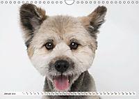 Kleine Hunde - Große Blicke (Wandkalender 2019 DIN A4 quer) - Produktdetailbild 1