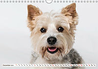 Kleine Hunde - Große Blicke (Wandkalender 2019 DIN A4 quer) - Produktdetailbild 12