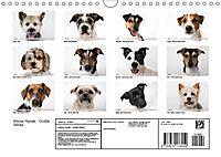 Kleine Hunde - Große Blicke (Wandkalender 2019 DIN A4 quer) - Produktdetailbild 13